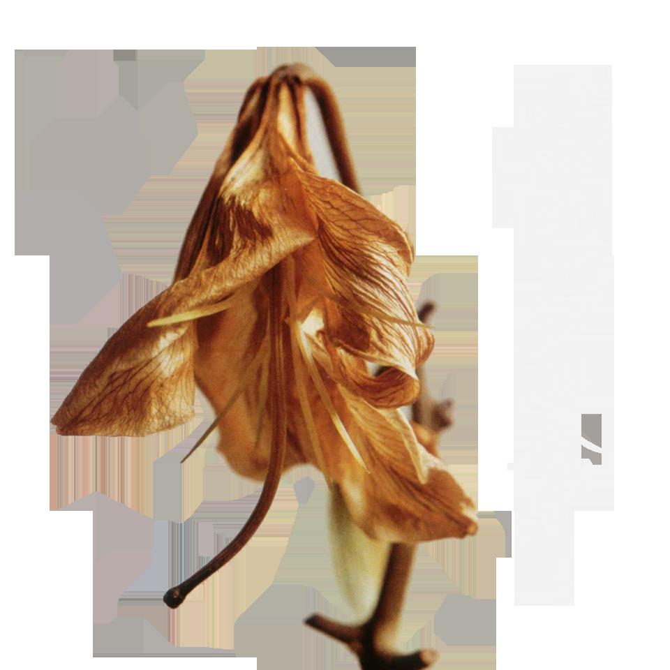 セツナブルースター『キセキ』 1...